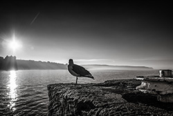 Seagull in Whitby