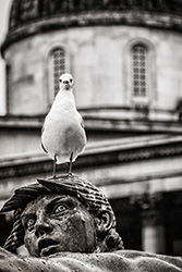 Seagull national gallery